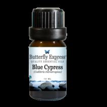 BlueCypress_a