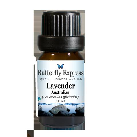 LavenderAustralian_a
